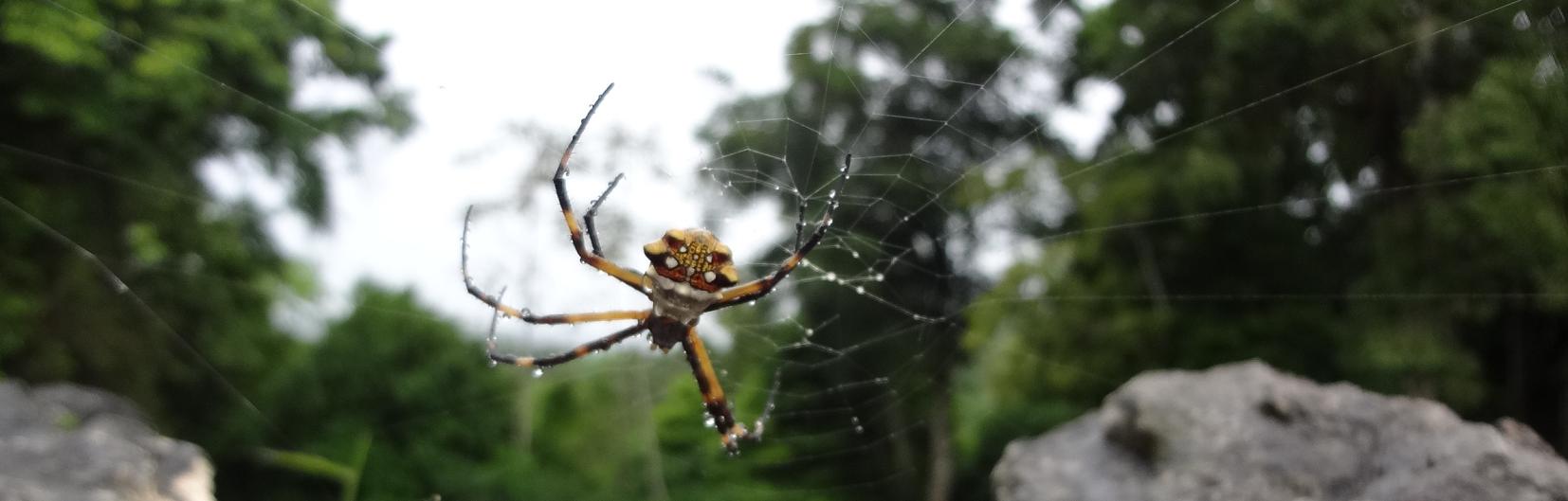 spinnenwering